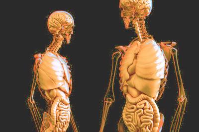 Anatomie Menschenkunde Biologieunterricht